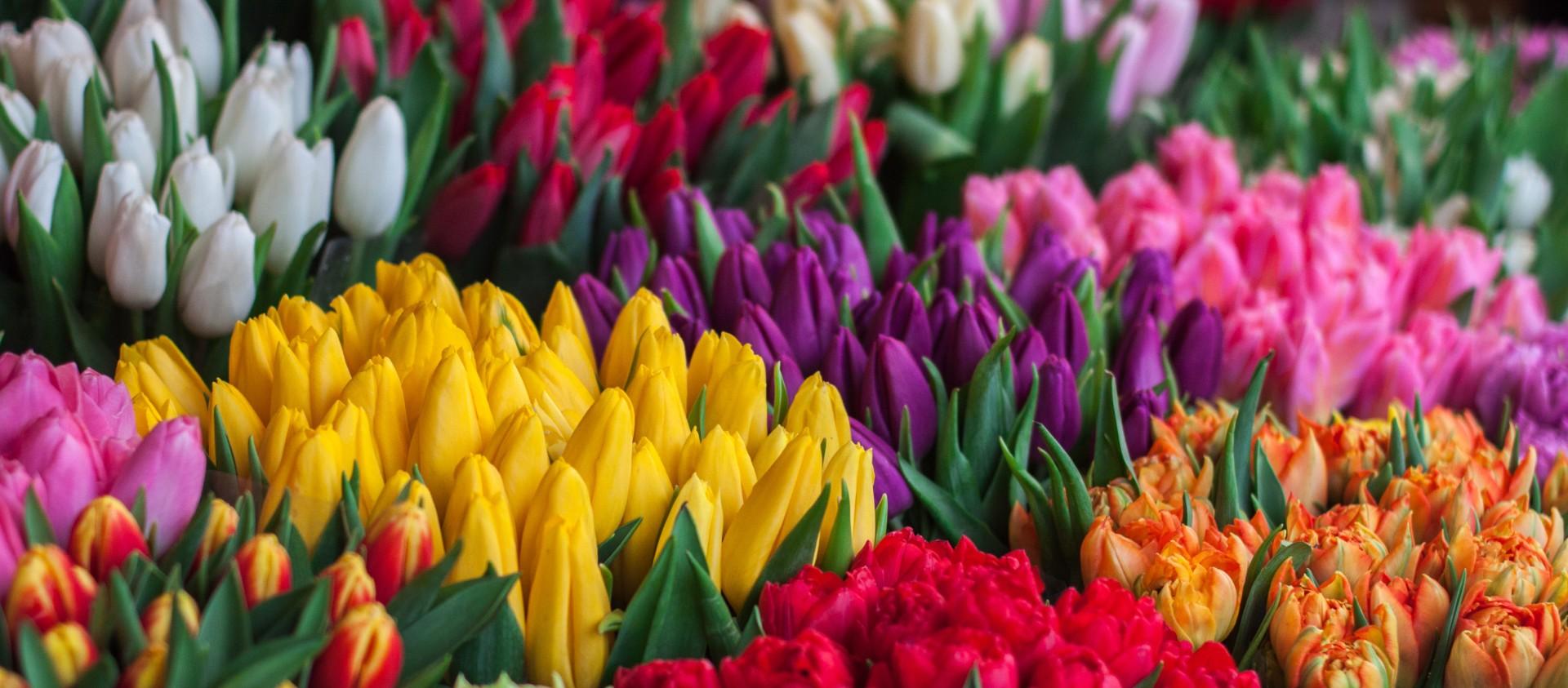 Easywork vacature bijrijder bloemen en planten